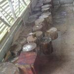 Logs cut from various exotic Hawaiian trees